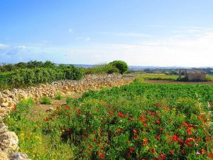 colourful Malta Gozo B&B dar ta Zeppi Qala